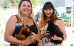 chook girls